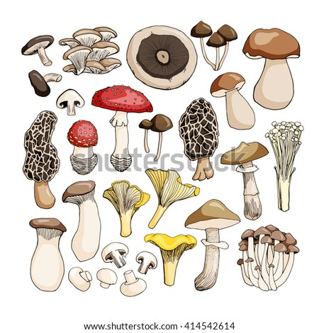 Hand drawn mushrooms isolated on white background. Vector illustration.