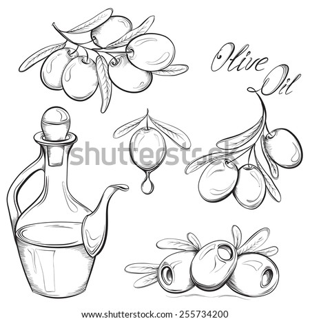Hand drawn olive set. Olive oil and olive branch. Black and white vector illustration - stock vector
