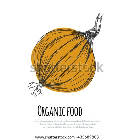 Hand drawn onion over white background