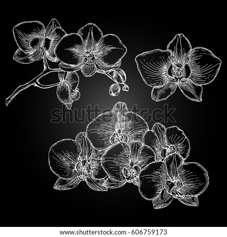 Hand drawn orchid.  Freehand drawing with imitation of chalk sketch