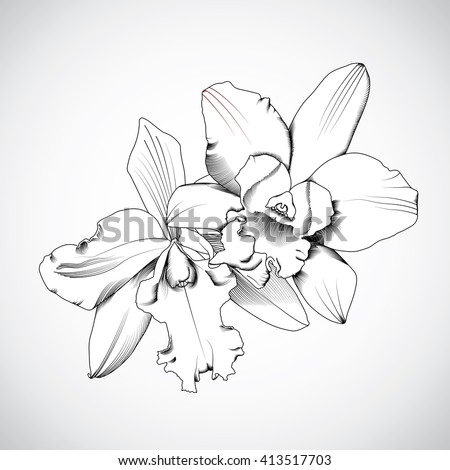 hand-drawn orchids flowers. Vector illustration