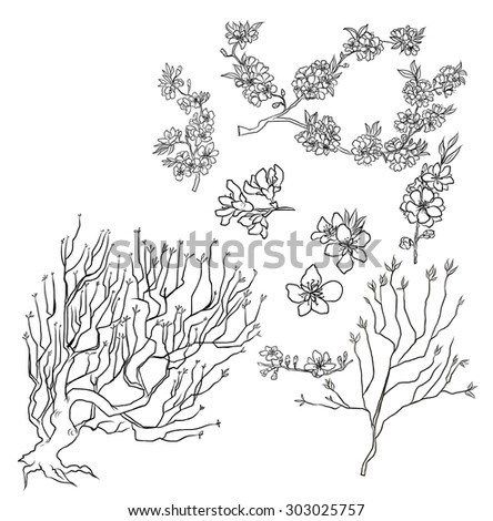hand drawn Peach Blossom isolate vector