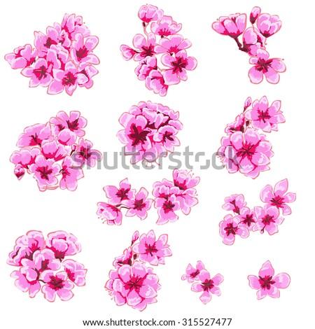 hand drawn peach blossom vector