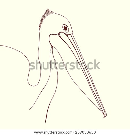 Hand drawn pelican portrait made in vector in linear sketch style. Vector graphic for branding or advertising. - stock vector