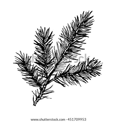 Hand Drawn Pine Tree Branch Isolated On White Background Ink Illustration In Vintage Engraved Style