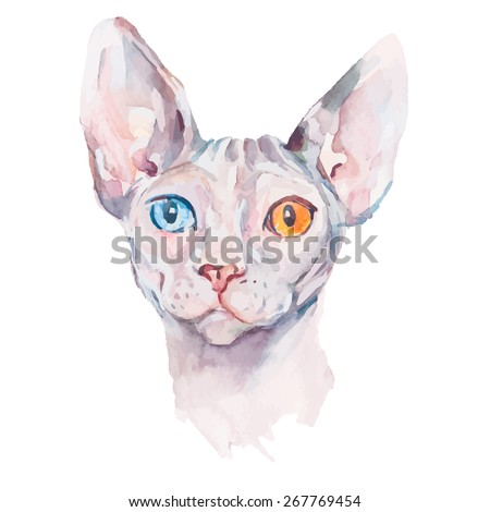 Hand drawn portrait Elegant Sphynx cat. Vector isolated elements. Fashion portrait of cat. Watercolor. Sphinx