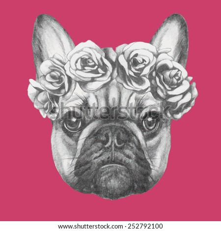 Hand drawn portrait of French Bulldog with roses. Vectorial isolated elements. - stock vector
