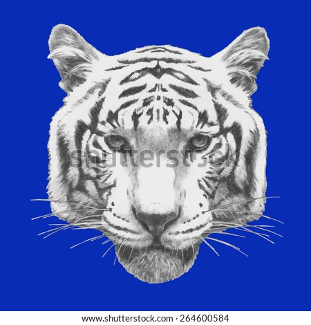 Hand drawn portrait of Tiger. Vector - stock vector