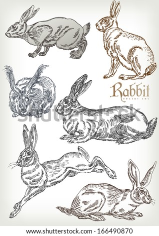 hand drawn rabbit vector set - stock vector