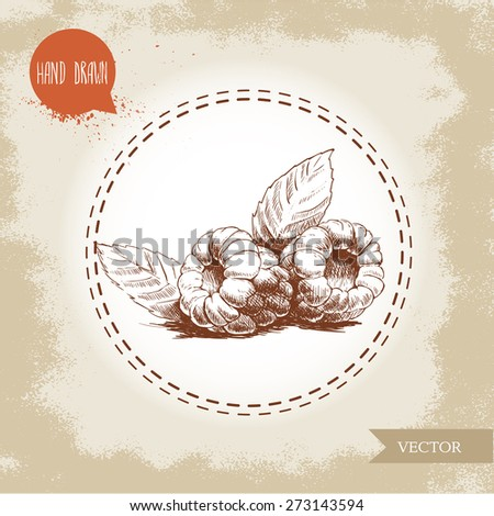 Hand drawn raspberries isolated on vintage background.Retro sketch style vector eco food illustration - stock vector