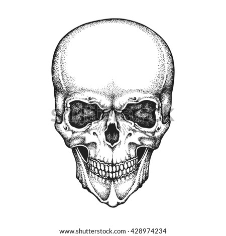Hand drawn realistic human skull. Vector illustration