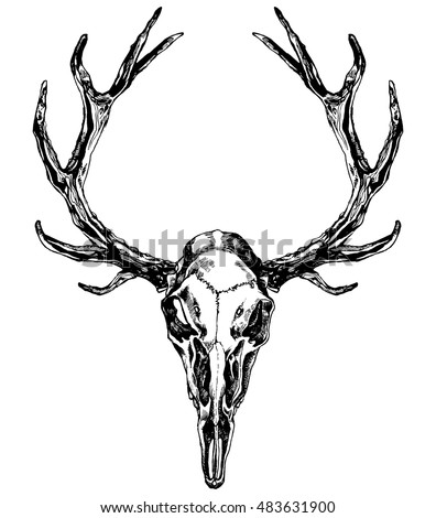 Hand drawn reindeer skull with antlers. Vector ink illustration isolated on white background. Boho, grunge, rustic style. Prints, posters, t-shirts and textiles