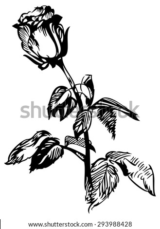 Rose Stem Drawing Stock Vector 31931683 Shutterstock