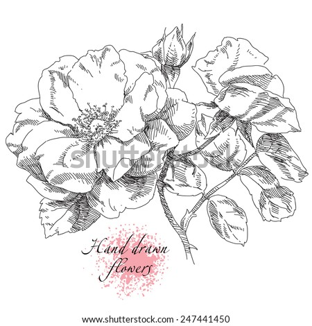 Hand drawn rose flowers - stock vector