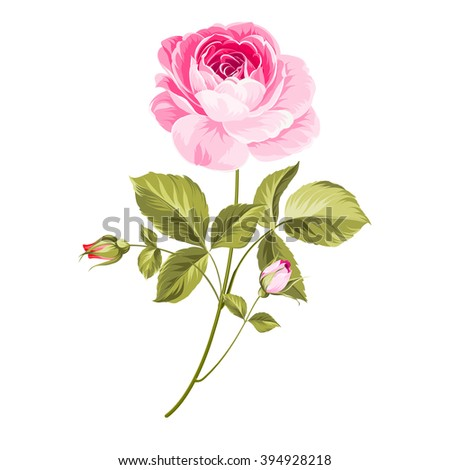 Hand drawn rose. Isolated over white background. Vector illustration. - stock vector
