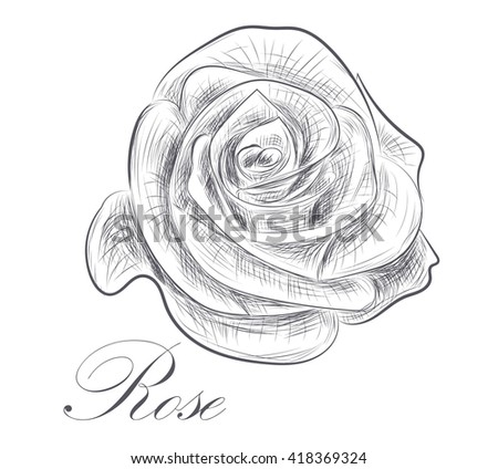 Hand drawn rose on white background - stock vector