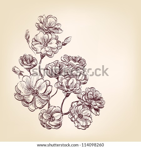 hand drawn roses - stock vector