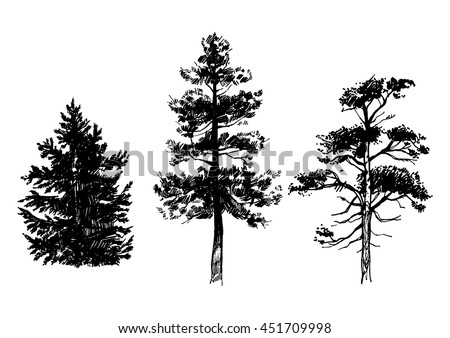 Hand drawn set of conifer trees isolated on white background. Ink illustration in vintage engraved style - stock vector
