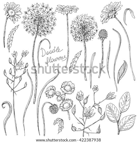 Hand drawn set of doodle wildflowers. Black and white flowers, buds and leaves for coloring. Floral elements for decoration. Vector sketch.