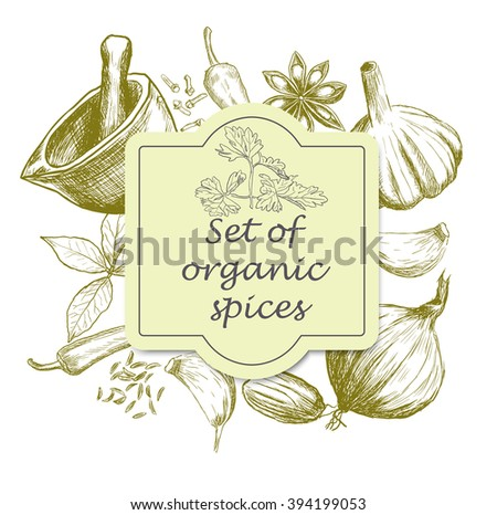 Hand drawn set of organic spices. Vector illustration