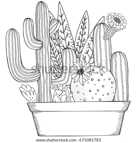 Cacti stock images royalty free images vectors for Cactus coloring page