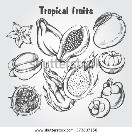Hand drawn set of tropical fruits - carambola, guava, mango, mangosteen, pitahaya (dragon fruit), kiwano. Vector isolated illustration.
