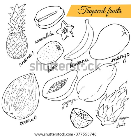 Hand drawn set of tropical fruits. Sketch illustration. - stock vector