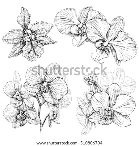 Hand drawn set with orchid flowers. Black and white vector illustration isolated on white