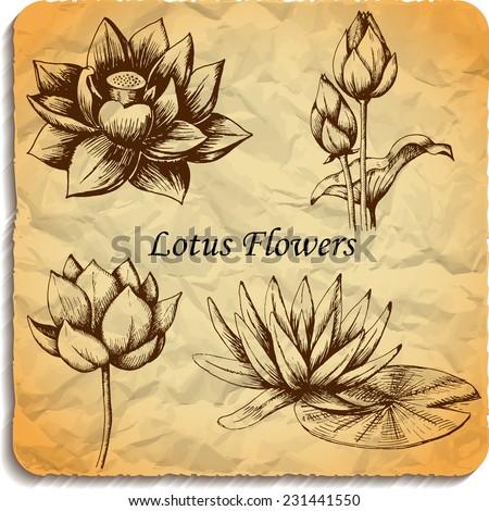 Hand drawn sketch beautiful lotus flower. Vector set illustration - stock vector