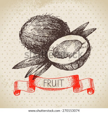 Hand drawn sketch fruit coconut. Eco food background. Vector illustration