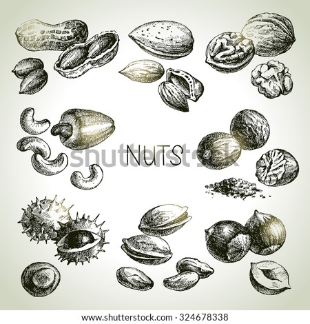Hand drawn sketch nuts set. Vector illustration - stock vector