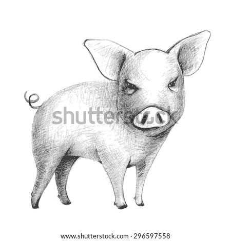 hand drawn sketch of a cute pig - stock vector