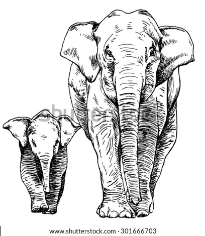 Hand drawn sketch of elephant mother and calf walking
