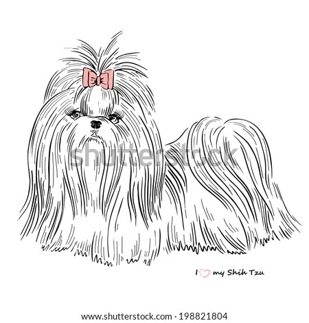 hand drawn sketch of Shih Tzu dog girl - stock vector