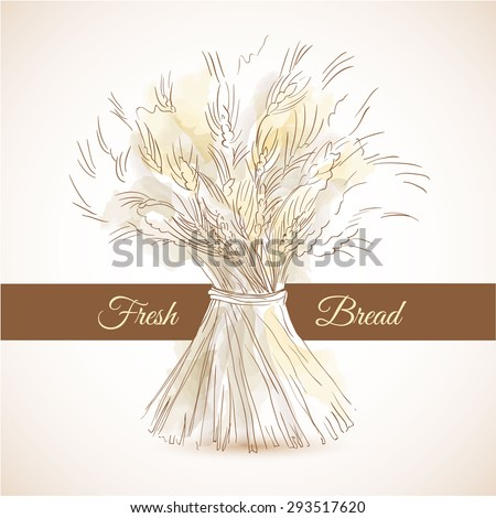 Hand drawn sketch sheaf of wheat. Doodle concept for fresh bread or flour products advertising campaign. Brown ribbon on background for your text - stock vector