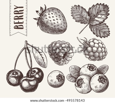 Hand drawn sketch style berries set. Raspberry, strawberry, cherry and blueberry.