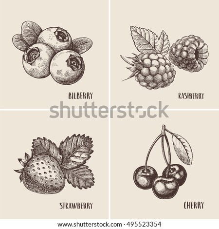 Berry Fruit Stock Images, Royalty-Free Images & Vectors ...