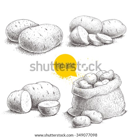 Hand drawn sketch style set illustration of ripe potatoes. Eco food vintage vector illustration - stock vector