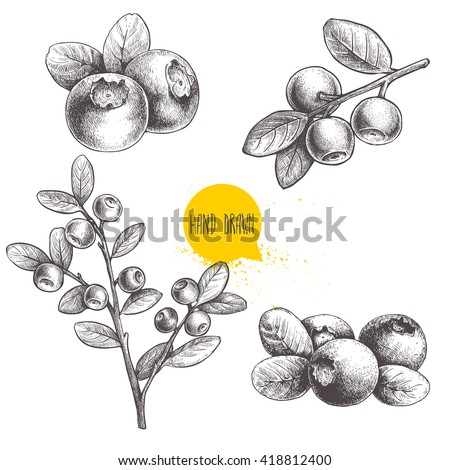 Hand Drawn Sketch Style Set Blueberries Stock Vector ...
