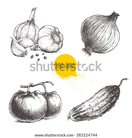 Hand drawn sketch style vegetables set. Tomatoes, onion, cucumber and garlics with pepper. Vintage fresh farm market food illustration. - stock vector
