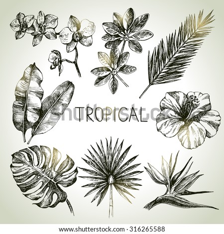 Hand drawn sketch tropical plants set. Vector illustrations - stock vector