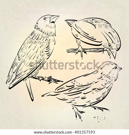 Hand drawn sketches with birds. Forest birds, drawing on a tablet.