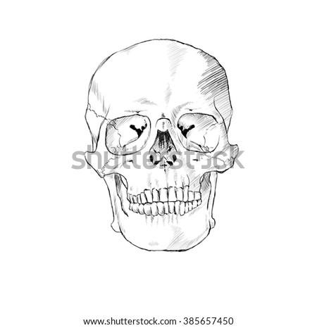 Hand Drawn Skulls In Monochrome. Vector Skulls Illustrations - stock vector