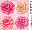 Hand drawn style garden roses - stock vector