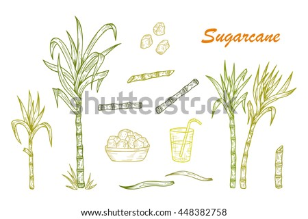 Hand drawn Sugar cane set. Sugarcane plants, Stalks, leaves, juice and sugar cubes. Vector illustration