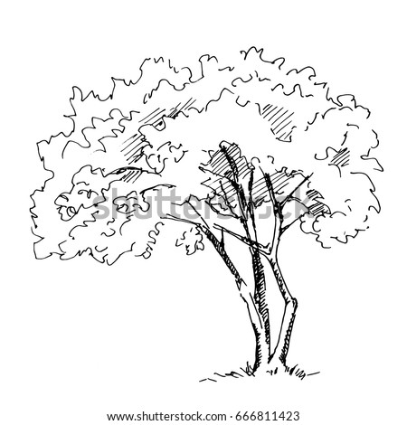 Hand Drawn Tree Isolated On White Background Sketch Vector Illustration