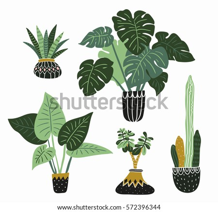 house plants drawing. hand drawn tropical house plants scandinavian style illustration modern and elegant home decor drawing