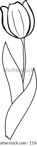 Hand Drawn Tulip on white background - vector