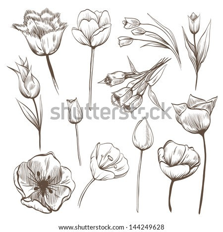 Hand drawn tulips flowers vector set