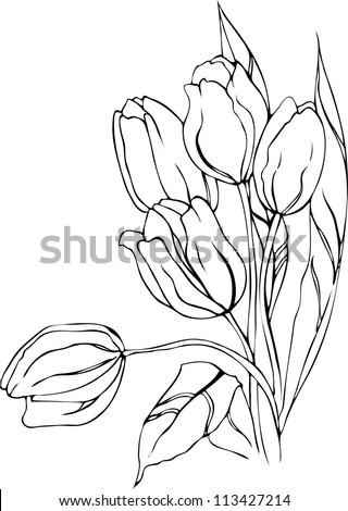 Hand drawn tulips. Vector. - stock vector